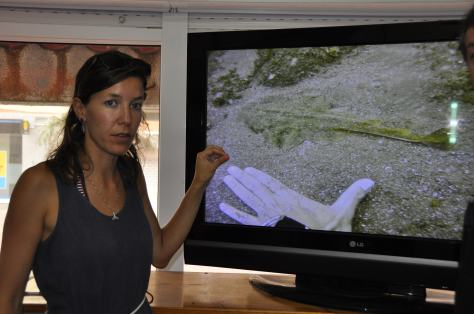 Eva Meyers presenting the Angel Shark Project @dive centers