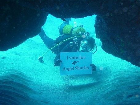 i vote for angel sharks